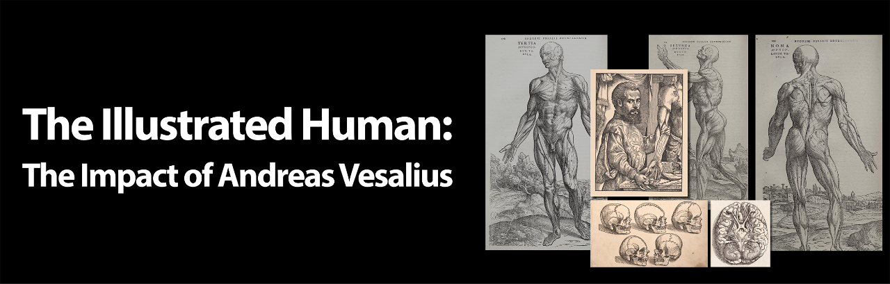 illustrations of the human body